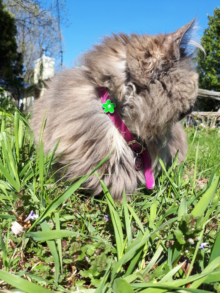 Abby in her flowered cat collar!