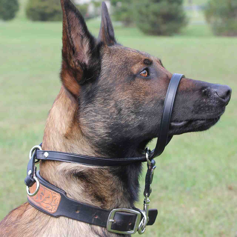 Slip n go head halter- easiest way to correct pulling in a way that doesn't harm the dog's neck.  Same principle as the halti type halter but corrects from the back of the head, instead of under the chin- and no buckles! Slide the brake down to fit close to the head to keep the tension and off you go!