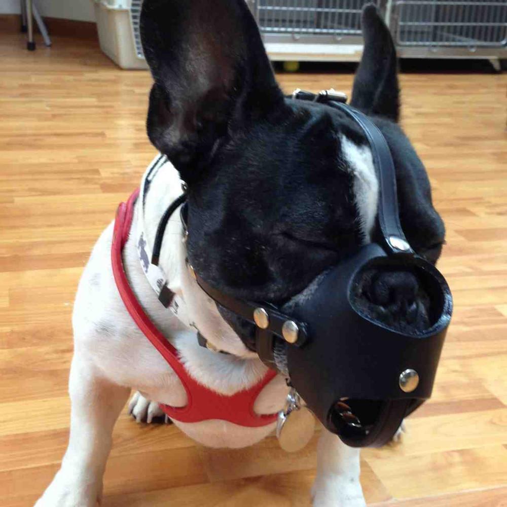 Black leather muzzle