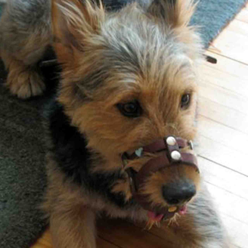 Brown leather muzzle