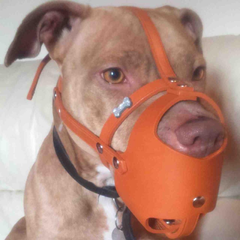 Orange leather muzzle