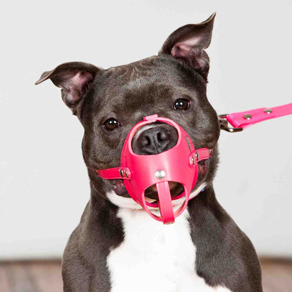 Hot Pink leather muzzle
