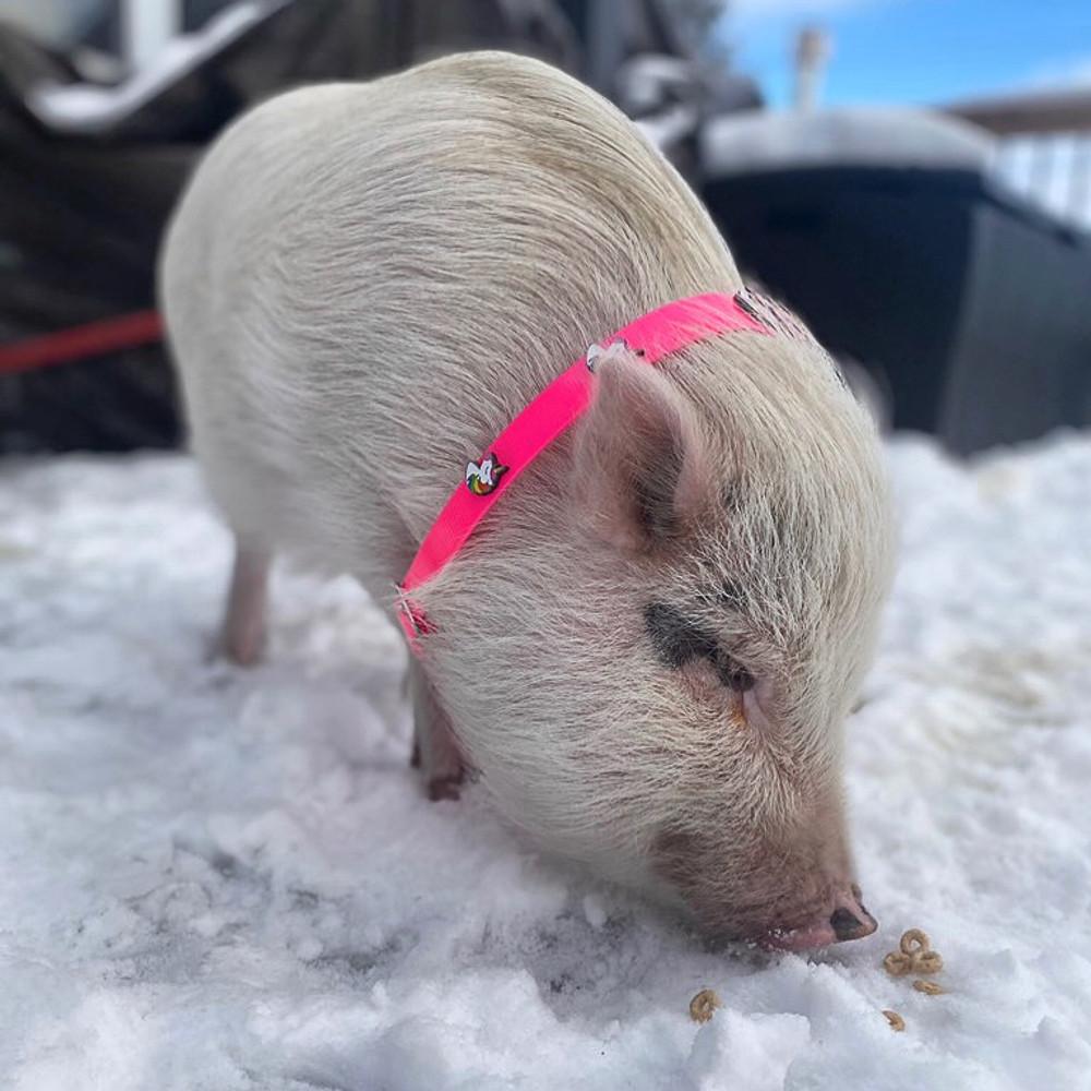 Pink Hydro Collar