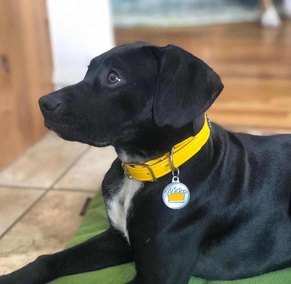 Yellow Hydro Collar