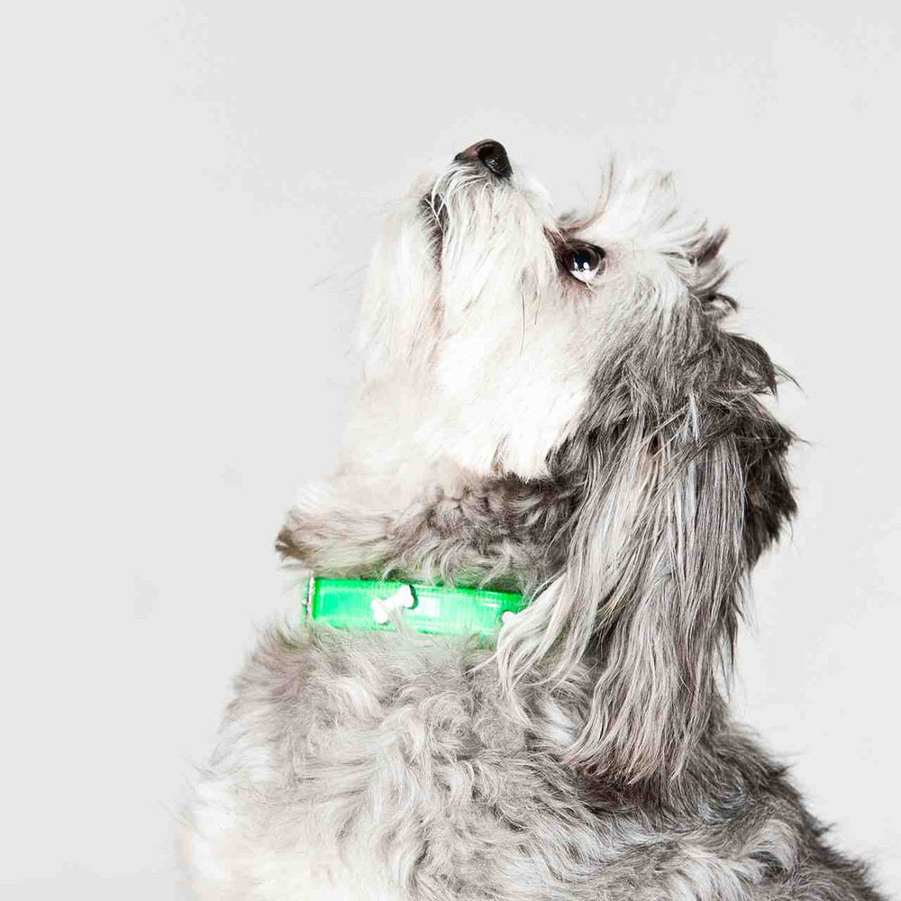 Dog modelling green hydro collar