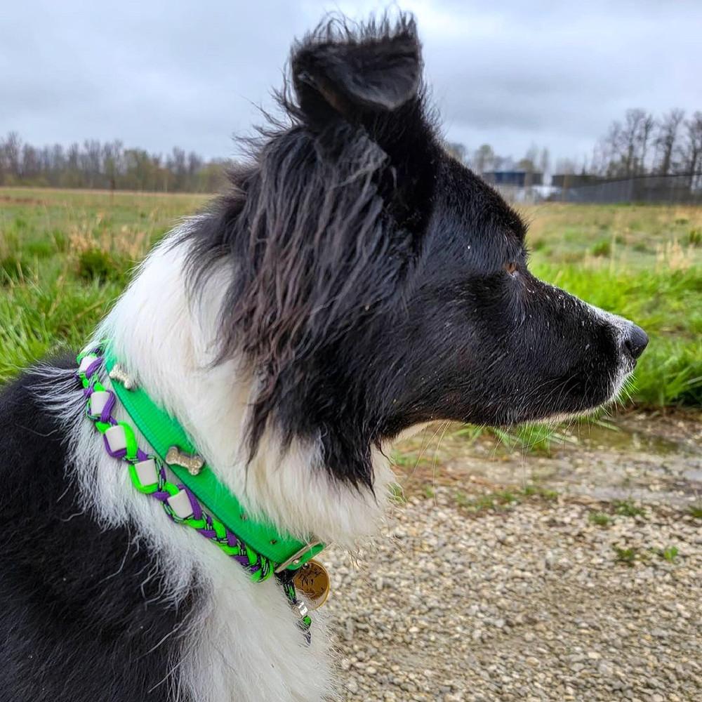 Lime Hydro Collar