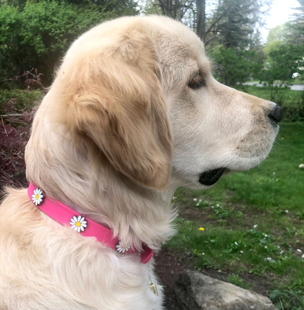 Pink vegan collar with daisies