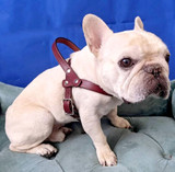 """""""Mitzi"""" Harness in Leather: Dog"""