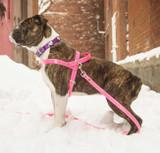 """Mitzi"" Harness in Hydro: Dog"