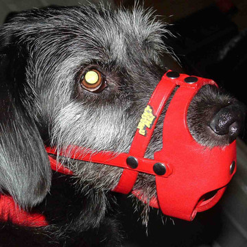 Red leather muzzle