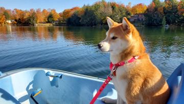 sakura at the lake