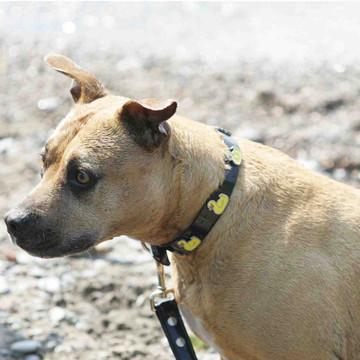 Dog modelling black hydro leash
