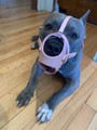 Brand new pink leather muzzle for this cutie girl!