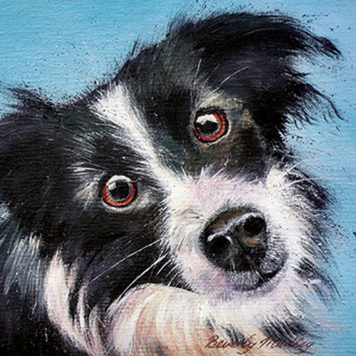 BM76507 - Young Border Collie (1 blank card)-