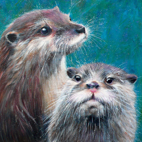 BM76719 - Otters (1 blank card)~