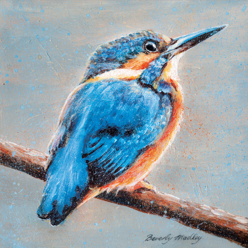 BM76819 - Kingfisher (1 blank card)