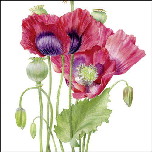 BS77413 - Poppies (1 blank card)
