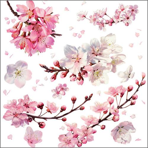 BS77662 - Cherry Blossom (1 blank card)