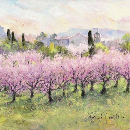 DO66484 - Peach Orchards (1 blank card)~