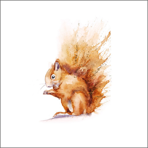 RT84700 - Red Squirrel (1 blank card)-