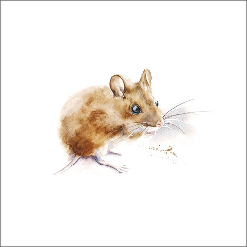 RT84701 - Mouse (1 blank card)~