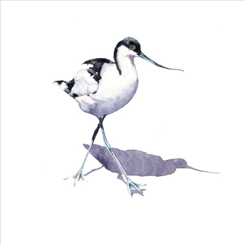 RT84844 - Avocet (1 blank card)~