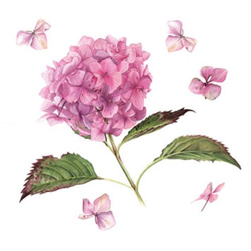 BS77531HB - Floating Pink Hydrangea (1 birthday card)~