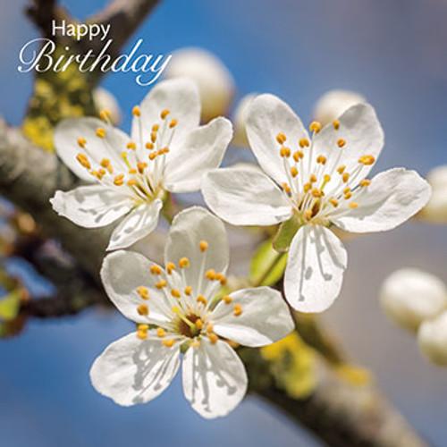 SM14037HB - Cherry Plum Blossom (1 birthday card)~