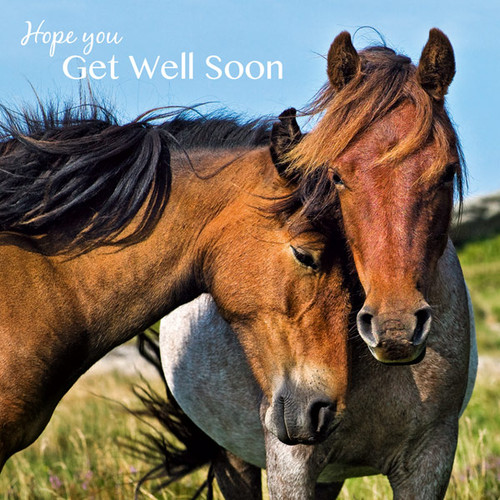 SM14104G - Ponies (1 get well card)~