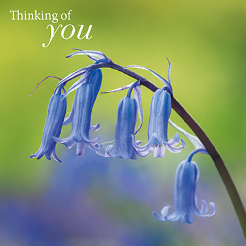 SM14652Y - Bluebell Stem (1 thinking of you card)~