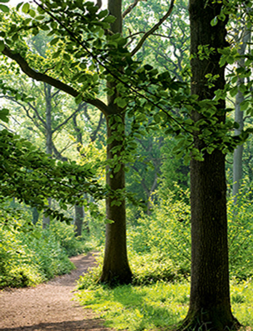 MIN11513 - Woodland Walk (1 blank minicard)~