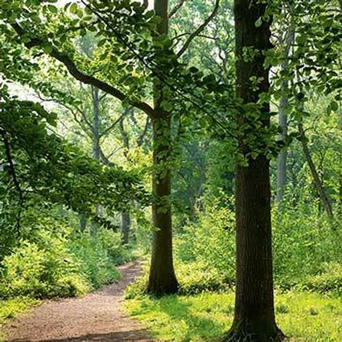 SM14085 - Woodland Walk (1 blank card)