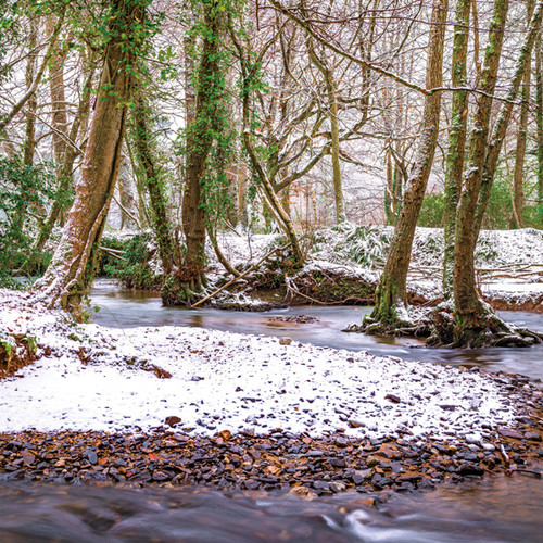 SM14119 - Winter Woodland (1 blank card)~