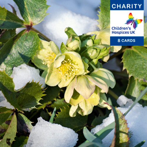 CC90010CH - Hellebores (1 pack of 8 charity Christmas cards)-