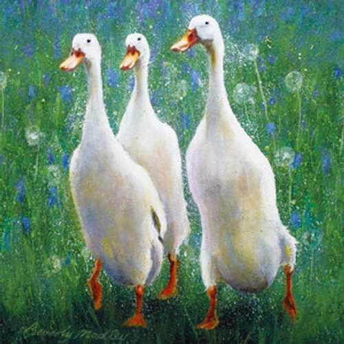 BM76720 - Indian Runner Ducks (1 blank card)~