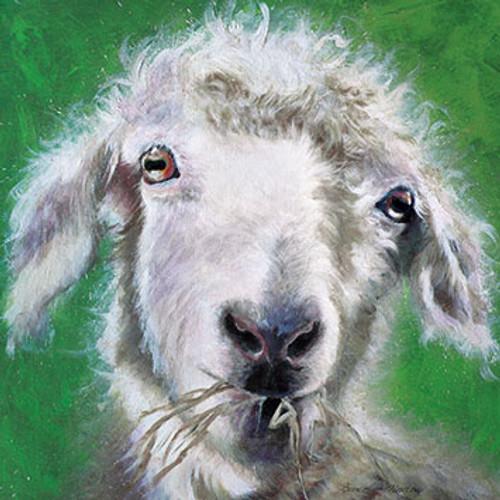 BM76506 - Angora Goat (1 blank card)~