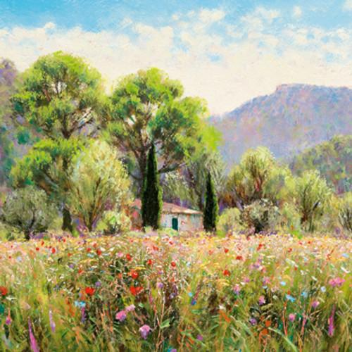 DO66400 - Flower field in the Corbieres (1 blank card)~