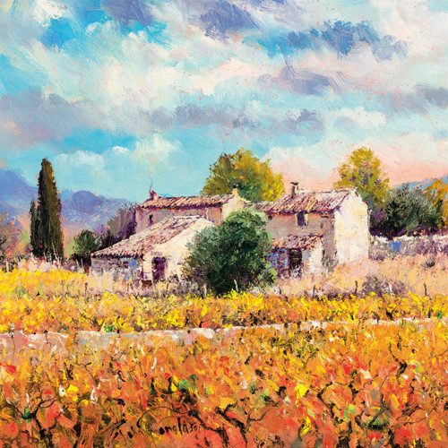 DO66920 - Autumn Vineyards in Provence (1 blank card)