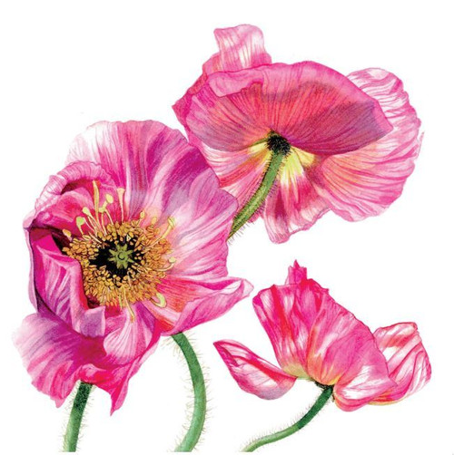 BS77856HB - Oriental Poppies (1 birthday card)~