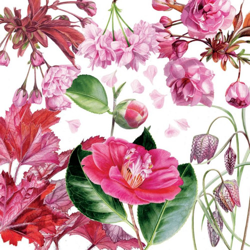 BS77858G - Spring Pinks (1 get well card)-