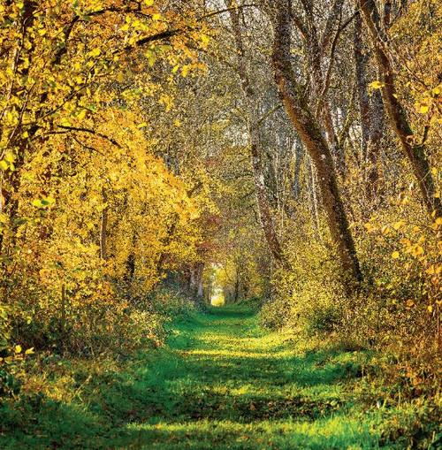 SM14171 - Autumn Walk (1 blank card)