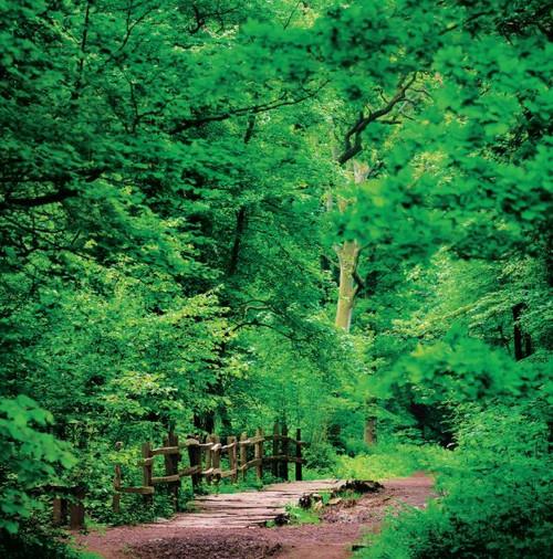 SM14175 - Woodland Path (1 blank card)