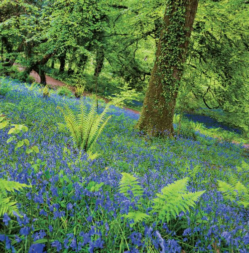 SM14176 - Bluebell Wood (1 blank card)-