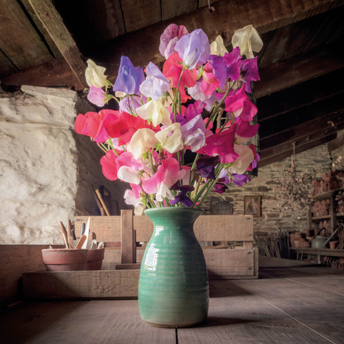 HG92643 - Sweet Peas in the Potting Shed (1 blank card)