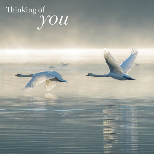 SM14188Y - Swans in Flight (1 thinking of you card)
