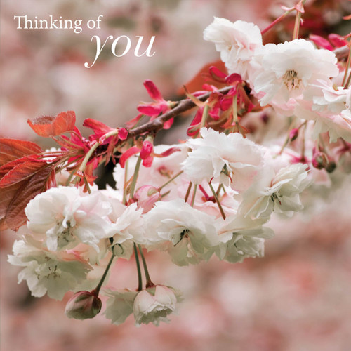 SM14189Y - Cherry Blossom (1 thinking of you card)