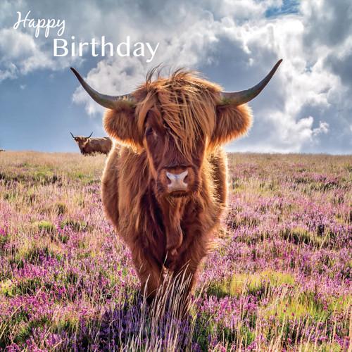SM14195HB - Highland Cow (1 birthday card)