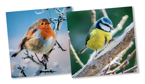 CX14178 - Robin & Blue Tit (1 pack of 10 Christmas cards)-