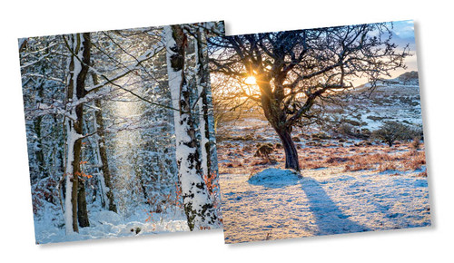 CX14179 - Snow & Sunlight (1 pack of 10 Christmas cards)