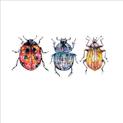 KC93006 - Beetles (1 blank card)